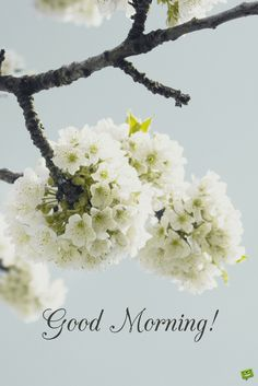 Good morning wishes with bouquet of good morning wishes images with flowers good morning with white flowers good morning picture. Good Morning Sunshine Quotes, Good Morning Meme, Positive Good Morning Quotes, Good Morning Wednesday, Good Morning Inspirational Quotes, Good Morning Picture, Good Morning Flowers, Good Morning Messages, Good Morning Good Night