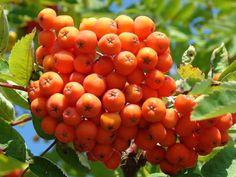 orange things in nature - Google Search