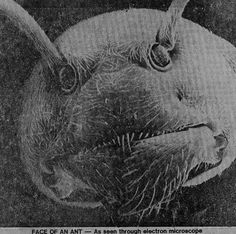 Head of an ant