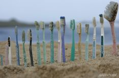 Toothbrushes found during a beach clean up.