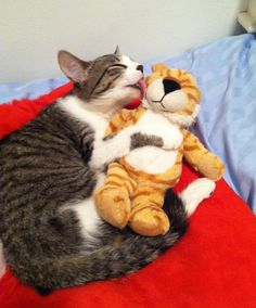 This cat adores her stuffed tiger and no one can tell her not to.