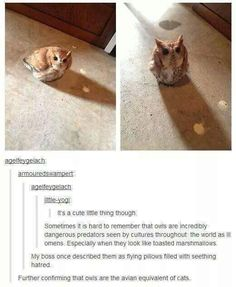 When we figured out that owls are basically just flying cats. | 23 Of The Cutest Things That Have Ever Happened On Tumblr