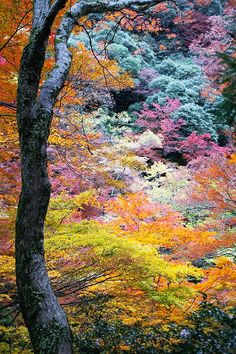 Japan in the fall - such incredibly beautiful colors in these leaves. A beautiful place for a honeymoon this sept Beautiful World, Beautiful Places, Beautiful Scenery, Amazing Places, Parcs, Amazing Nature, Belle Photo, Mother Earth, Pretty Pictures