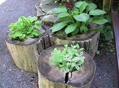 Creative use of old stumps!