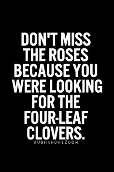 #focus #Don't miss the roses because you were looking for the four-leaf clovers