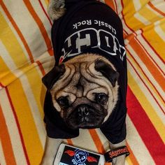What?!... I'm a Rockaholic! #mauricethepug #rockaholic #rockfm #rock #music #classicrock #rockmusicstation #itrocks #rockintheweekend #rockfmromania #pug #mops #dog #puppy