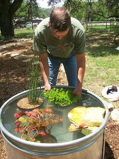 ... turtle pond ideas on Pinterest Turtle pond, Ponds and Turtle habitat