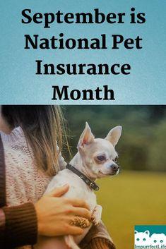Is Pet Insurance Worth It Cheap Health Insurance Supplemental Health Insurance Pet Insurance