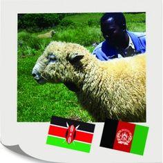 Bryndza síce z tejto ovce nebude, ale mnohoraký úžitok určite áno. S Vašim prispením podporujeme chov oviec v Keni a Afganistane. Spracovaním a predajom vlny si kenské ženy dokážu výrazne zvýšiť svoje nízke príjmy, naopak, afgánske ovečky majú vynikajúce mäso a mlieko, ktoré nasýti nejednú rodinu. K tomu má ovca ročne dve aj tri jahniatka a ovčie bobky sú výborným hnojivom do každej záhrady. Tento darček skrátka nestráca čaro ani po rokoch.