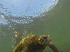 Mergulhando com tartarugas em Galápagos