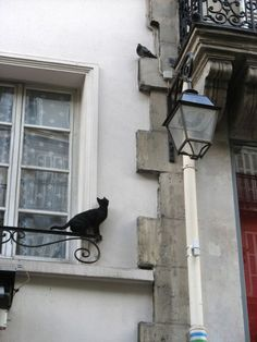 Cat hunting a Pigeon (via Barbas06)