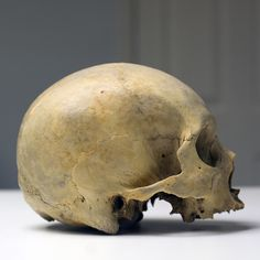 UB_Skull1_7.jpg