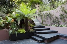 Patio garden at basement level at the Morgan house in Notting Hill, London, UK, designed by Modular Gardens in conjunction with Crawford & Gray Architects. Plan view showing slate steps leading down from galvanised metal stairs to the slate patio. Raised bed and powder-coated steel planter, with tree ferns, melianthus, phormiums, ornamental grass, banana and olive trees, bamboo and yucca. A copper reflective material is used on the wall behind the planting to create a mysterious mirage-like…