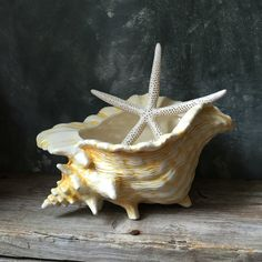 Seashell Ceramic Planter: Vintage Ceramic Conch Shell by Untried