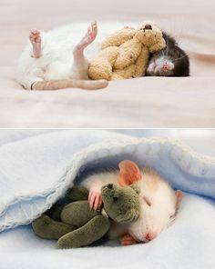 Tiny Teddies for mice
