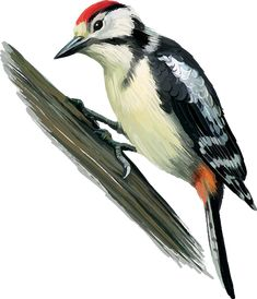 tubes oiseaux Arte Naturalista, Animal Templates, Free Printable Art, Bird Quilt, Animal Posters, Watercolor Bird, Exotic Birds, Bird Art, Easy Drawings
