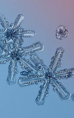 Amazing Closeups Of Snowflakes Give A Little Glimpse At How Awesome Nature Is   Co.Exist   ideas + impact