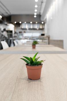 Little plant touches at the restaurant.  : #parkafoodco #parka #vegan #vegansoftoronto #torontovegan #vegantoronto #blogTO #dailyhiveto #dishedto #narcitytoronto #curiocitytoronto #tastetoronto #tastethesix #foodtoronto #torontofood #to_finest #tastethe6ix #toreats #cravethe6ix #torontofoodies #torontorestaurants Vegan Comfort Food, Vegan Restaurants, Little Plants, Plant Based Recipes, Whole Food Recipes, Parka, Planter Pots, Eat, Parkas