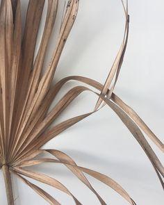 Dried palm pleats