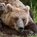 ALL BEARS ARE EQUAL There are eight species of bears: Brown Bear Black Bear Giant Panda Polar Bear...