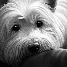 Nigel Hemming Dog Tired West Highland Terrier Artist Only * ! Westies, Bichons, Terriers, Cute Puppies, Dogs And Puppies, Doggies, West Highland White Terrier, Highlands Terrier, White Dogs