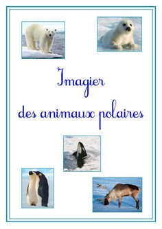Imagier des animaux polaires page 1                                                                                                                                                                                 Plus Animal Facts For Kids, Fun Facts About Animals, Arctic Polar Bears, Rare Albino Animals, Polar Animals, African Grey Parrot, Pet Day, Extinct Animals, Kindergarten Science