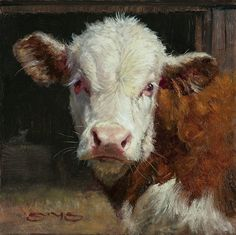 Curious Calf by William Suys Oil ~ 6 x 6 - Cow painting