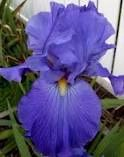Feed Back #Iris. For perennial gardening tips, visit us at…