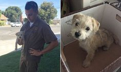 A United Parcel Service driver made an unscheduled collection in Hughson, California - a puppy that was dumped out of a truck. Jason Harcrow's colleagues said they were proud of him.