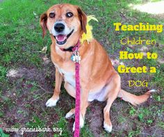 """Have you seen a """"yellow dog""""? While it's important to train your dog, it is also important to teach children how to greet a dog. Gracie's Bark is helping to spread the word about The Yellow Dog Project!"""