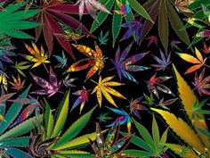 Marijuana decor is the epitome of cool especially if you are passionate about cannabis. Surprisingly you can find an abundance of marijuana decor Weed Wallpaper, Leaves Wallpaper, Wallpaper Gallery, Heart Wallpaper, Disney Wallpaper, Marijuana Leaves, Weed Leaves, Weed, The Journey