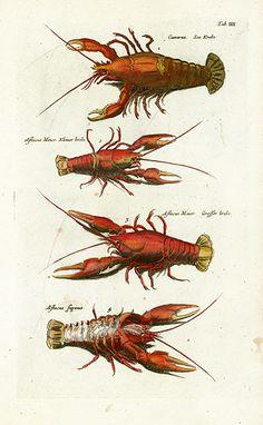 Jonston Fish Prints, Shell Prints, Crab Prints, Lobster Prints, Jellyfish Prints, Sea Prints 1767
