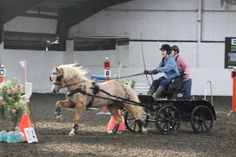 Indoor Carriage Driving Wix 8 March 2014, Mike Watts photo