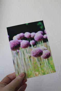 """Carte postale """"fleurs de ciboulette géantes"""" en couleur : Cartes par le-petit-bazar-des-trinomettes-en-delire"""