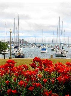 Harbor - Chicago | Flickr - Photo Sharing!