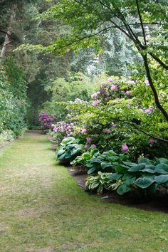 Shade Garden and Pathway