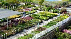 Get directions to Green Acres Nursery & Supply in Elk Grove, Folsom, Rocklin, Roseville, and Sacramento. Garden Nursery, Plant Nursery, Garden Center Displays, Nursery Supplies, Very Beautiful Flowers, Leafy Plants, Flowering Shrubs, Garden Shop, Gardens