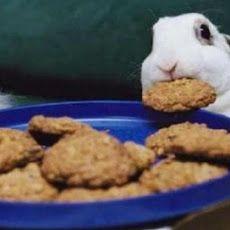 ° Pumpkin Plus ° Pet Bunny Rabbit Treats Recipe. I wanna make some natural treats for all my babies soon.