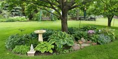 another hosta garden in the front part of the yard around the bird bath and bird houses
