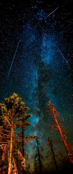 #neverhaveiever made a wish over the Perseids Meteor Shower @StudentUniverse