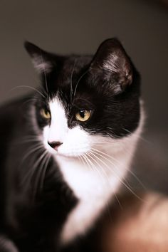 Black & White #cat