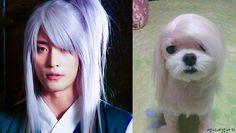 Cute & Funny ^^ credit : Faith Chinese Baidu, thank you 감사합니다 谢谢 韩版神医 中国百度 谢谢 水草走古车 Sung Hoon @bbangsh83 .. 성훈 .. Korean Actor . Facebook Fan page :...
