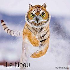 Le #tibou suite de la série #animomix #animalbuzzz