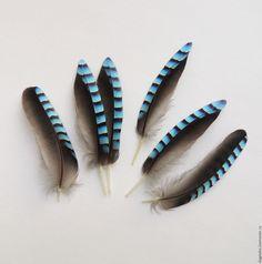Картинки по запросу перья