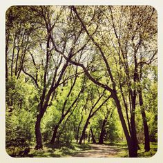 The bike path that runs along the Minnehaha Parkway in Minneapolis runs through the sun soaked woods.