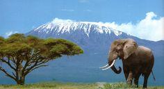 Tanzania. Beautiful Mt. Kilimanjaro