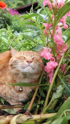 Cute Kitten Gif, Kittens Cutest, Cats And Kittens, Pretty Cats, Beautiful Cats, Animals Beautiful, Animals And Pets, Cute Animals, Cat Plants