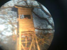 binocular forest pic