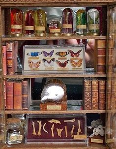 Curiosity cabinet or collector's cabinet