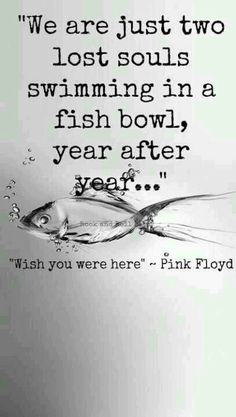 Pink Floyd,,, WE'ER JUST TWO LOST SOULS SWIMMING  IN A FISH BOWL,,,,,LOVE THE WORDS IN THIS SONG,,, D.H.